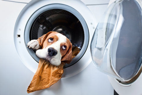 dog chewing clothes in washing machine