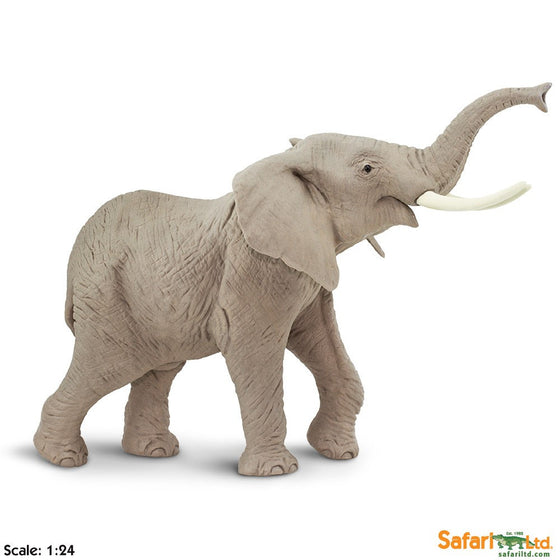 African Elephant - Little Whale