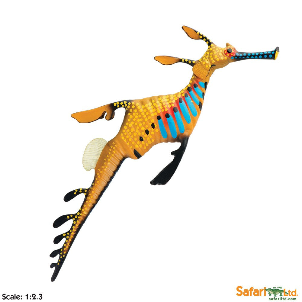 Weedy Seadragon - Little Whale