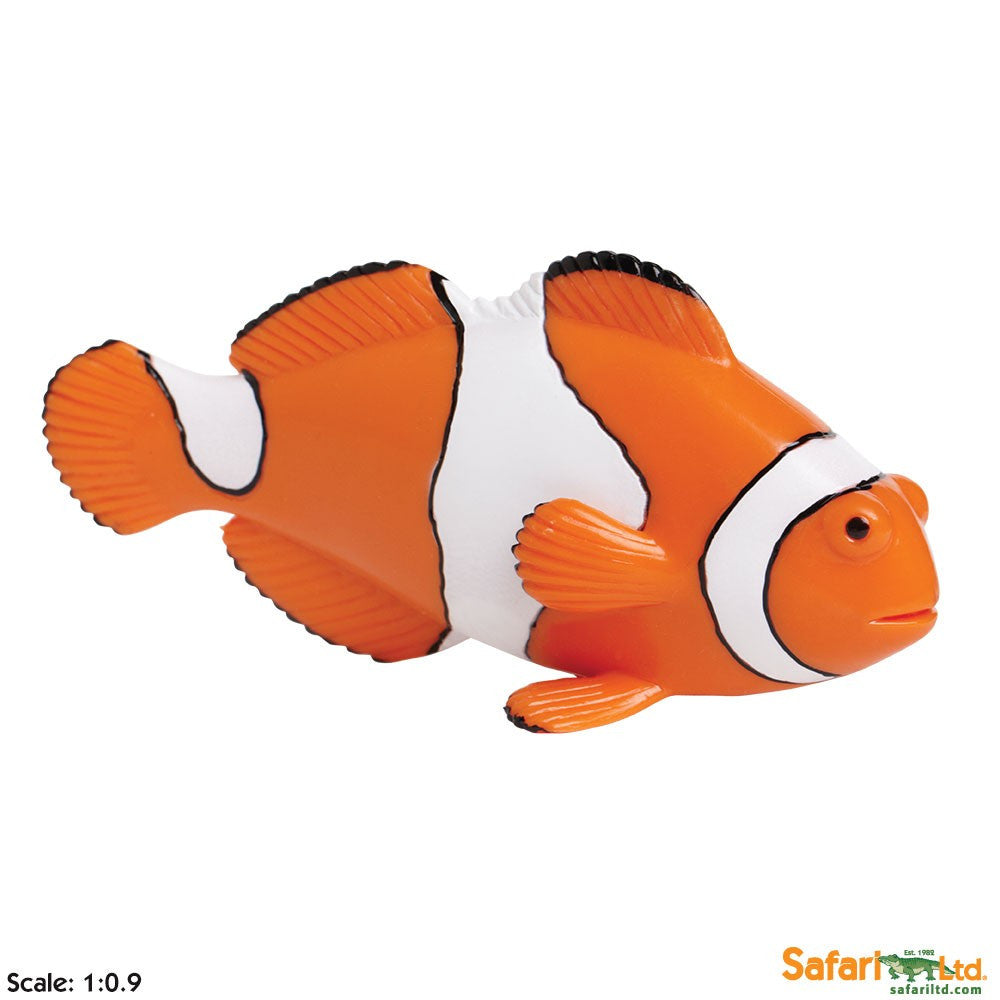 Clown Anemonefish - Little Whale