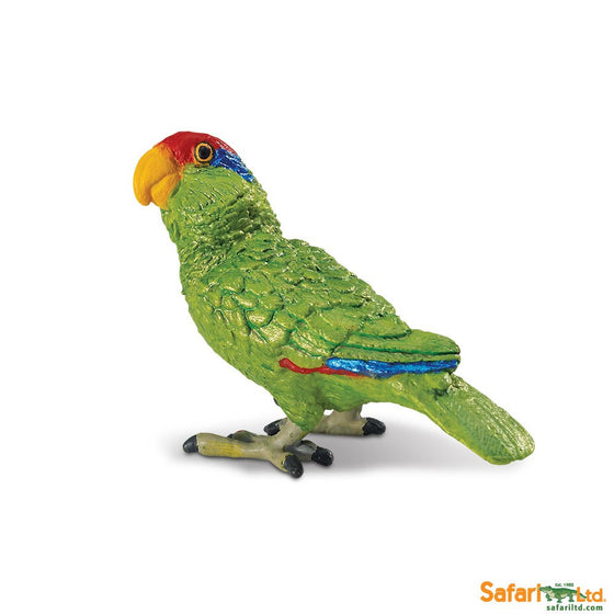 Green-cheeked Amazon Parrot - Little Whale