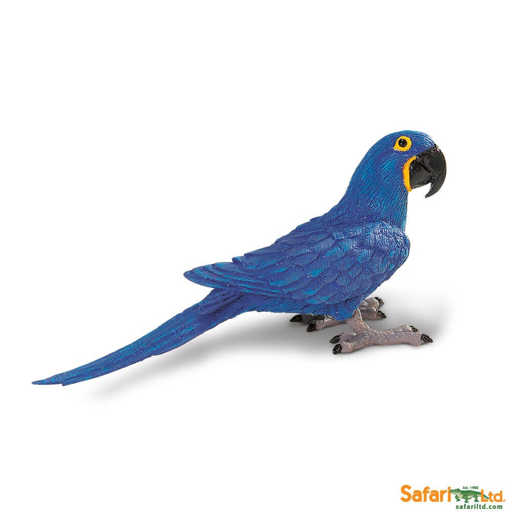 Hyacinth Macaw - Little Whale