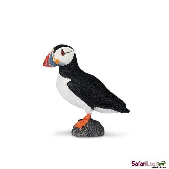 Atlantic Puffin - Little Whale