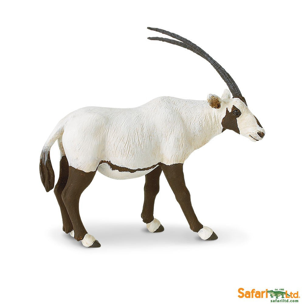 Arabian Oryx - Little Whale
