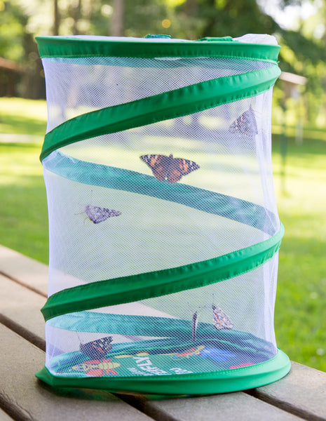 Pop-up Butterfly Cage