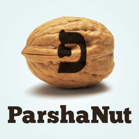 ParshaNut by David Kasher - Jewish Gifts, Collectibles and Judaica | Reboot Shop