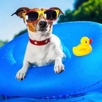 Keep your pups cool