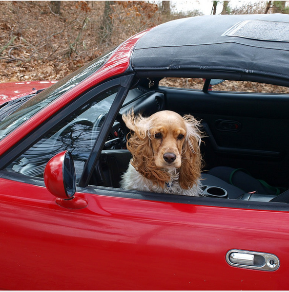 Does Your New Puppy Hate Riding The Car? This Is What You Need To Do.