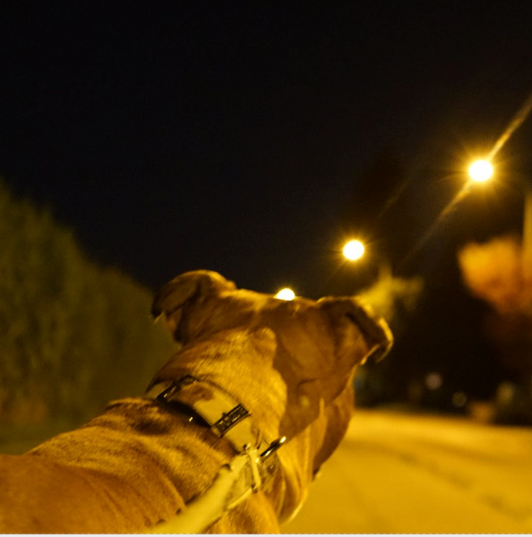 6 Top Tips To Walking Your Dog At Night