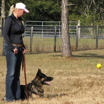 Simple dog obedience training tips