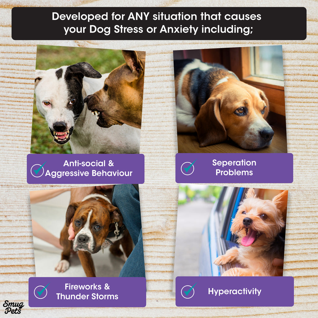 SmugPets Calming Pet Chews for Anxiety Relief for Dogs - SmugPets