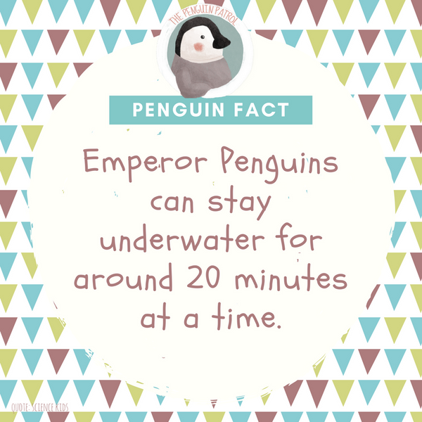 Penguin Fact - 20 Mins Underwater