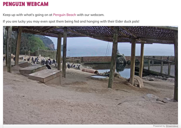 Living Coasts Penguin Webcam Image Still