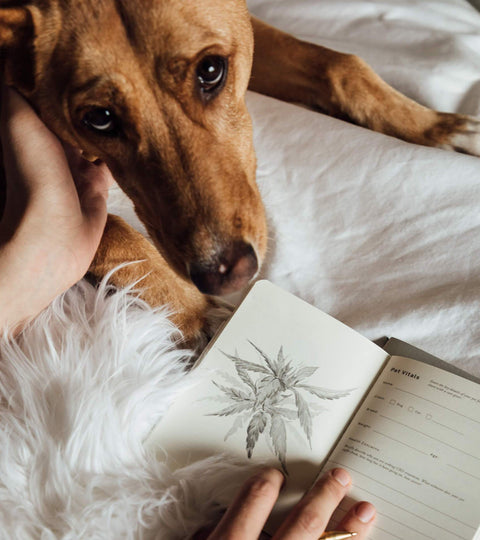 The Pet Jotter: A Wellness Journal for Your Animal Companions