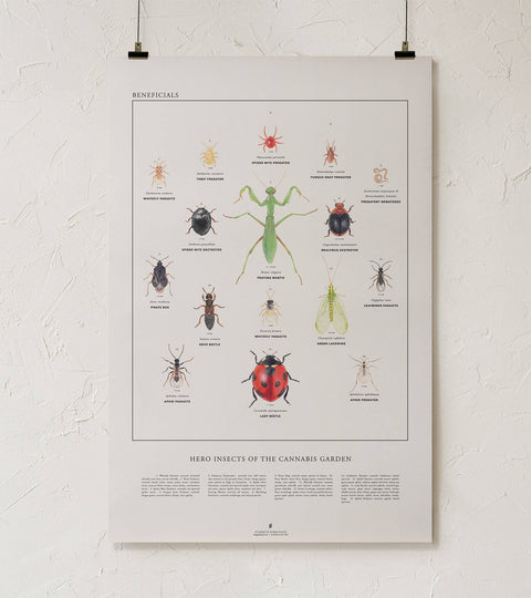 Beneficial Insects Art Print - Goldleaf