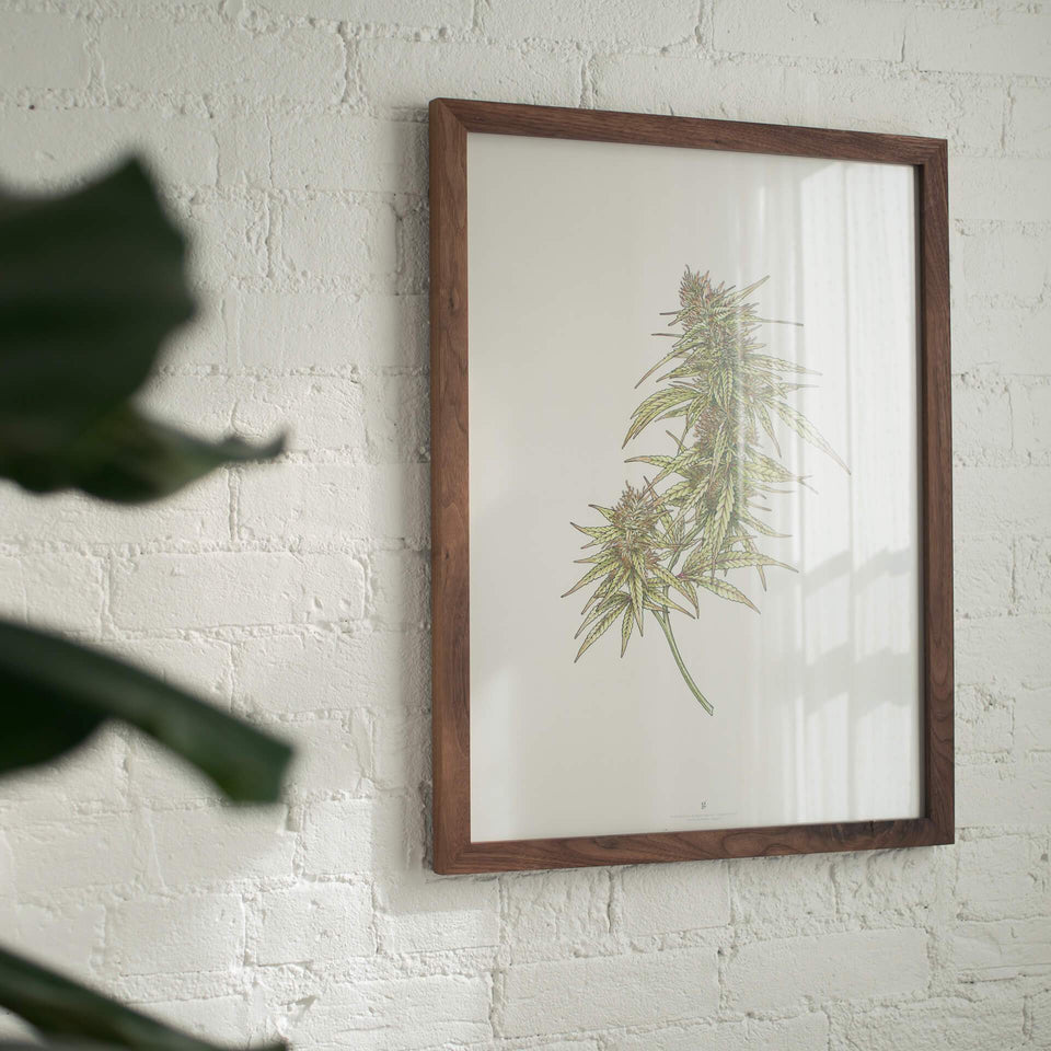 Goldleaf Cannabis Art Collection - Marijuana Prints and Infographics
