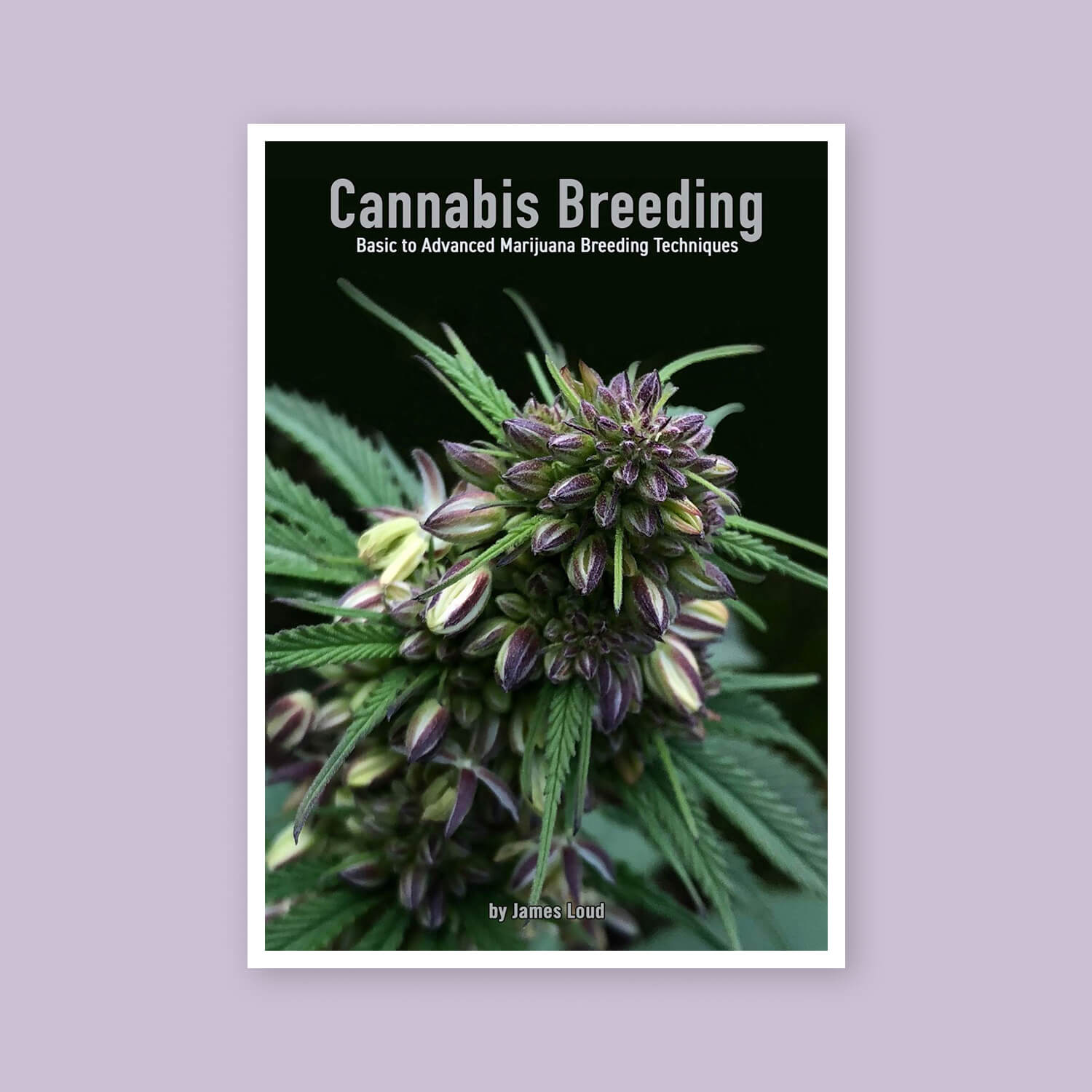 Cannabis Breeding - Goldleaf Bookshelf