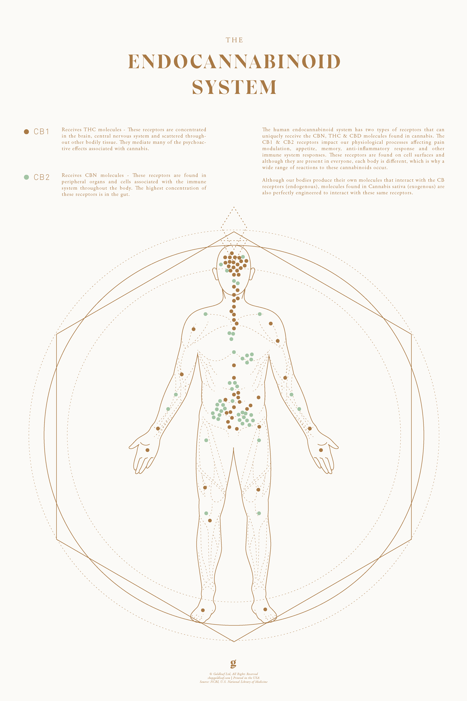Endocannabinoid System Body Chart by Goldleaf