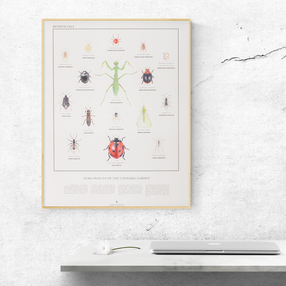 Beneficial Insects infographic print by Goldleaf