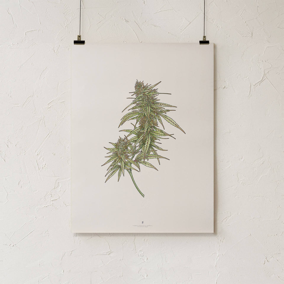 Goldleaf Wildfire Bundle - Botanical Illustration Print
