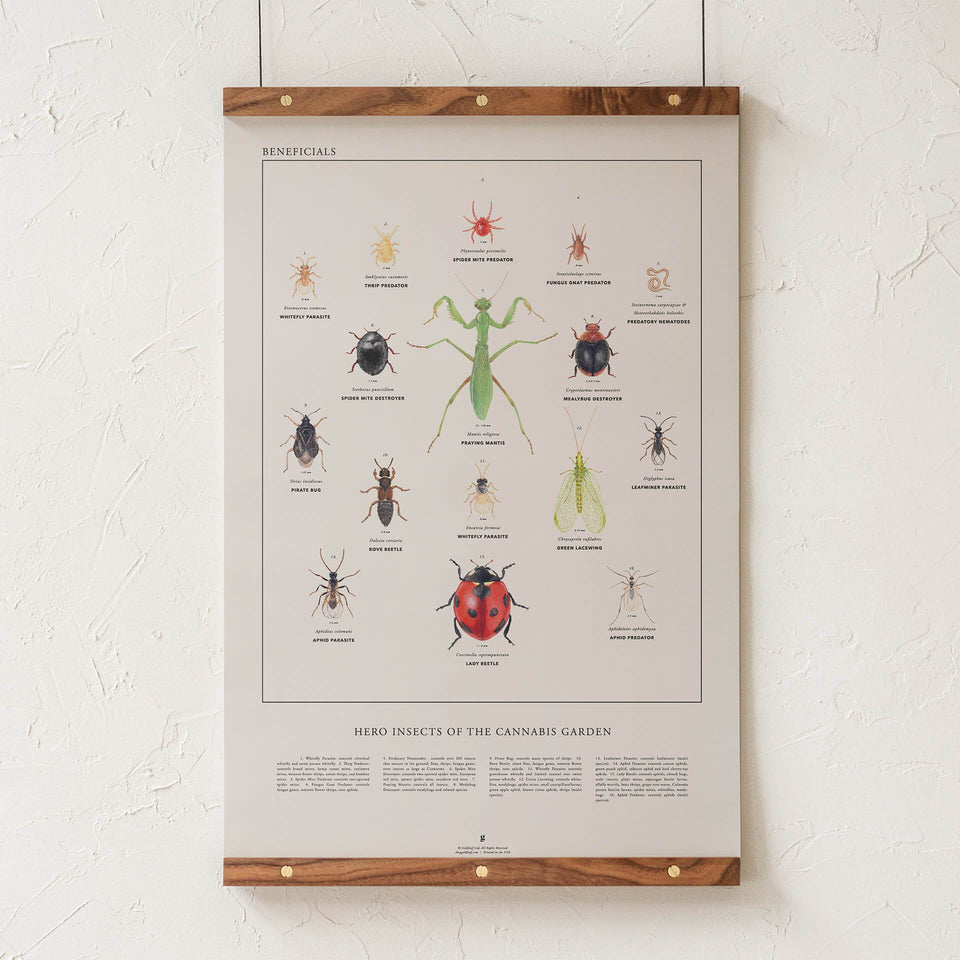 Beneficial Insects Print - Heroes of the Cannabis Garden - Bug Illustration Infographic - Marijuana Gardening - Goldleaf