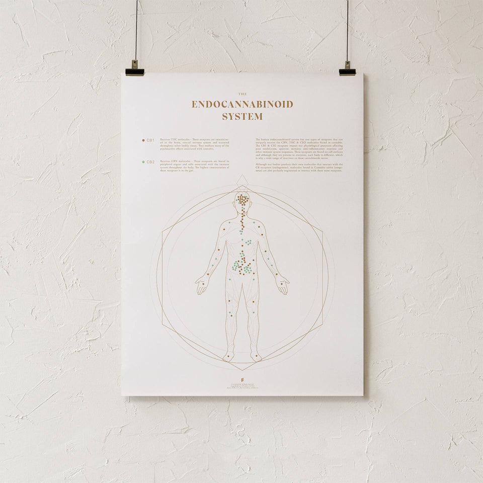 Endocannabinoid System Map Print - ECS System Chart - Cannabis Art - Medical Marijuana Education - Goldleaf