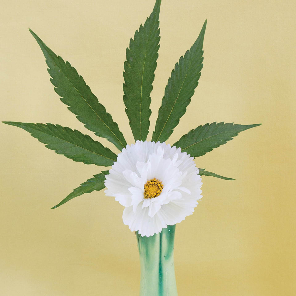 Yellow Ikebana Print - Cannabis Botanical Floral Arrangement Poster - Marijuana Art - Broccoli Magazine - Goldleaf
