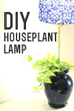 7 Steps to Turning Your Plant into a Lamp