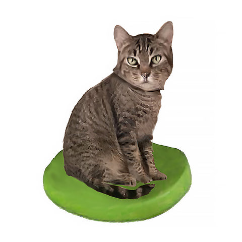 Custom Cat Bobblehead - American Shorthair