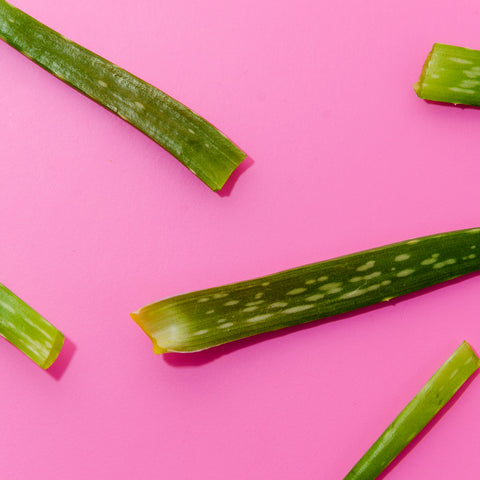 close-up-green-aloe-vera-leaves-pink-background