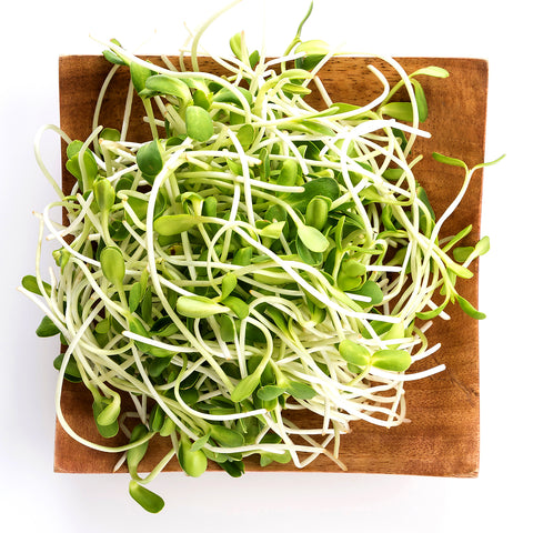 sunflower-sprouts