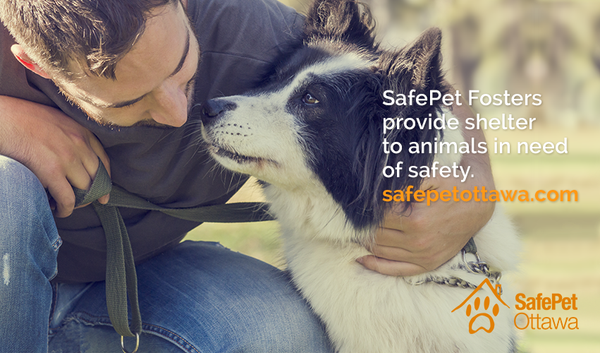 SafePet Ottawa – A network that supports abused women and their pets