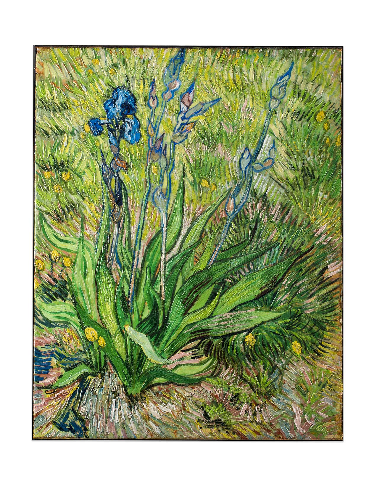 Buy a 3D Reproduction of Iris by Van Gogh, with Verus Art® Re-Creations