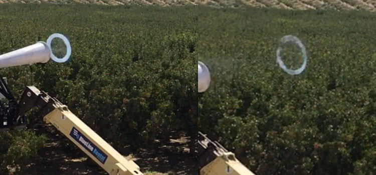 Crows Damaging a Pistachio Orchard -Vortex Ring Accelerator Bird Defense Trial