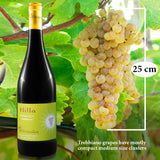 HILLA Trebbiano grapes dimensions