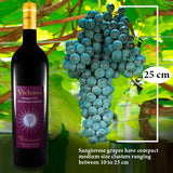 VICTORES Sangiovese Superiore grapes dimensions