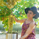 DAR Albana huge grapes