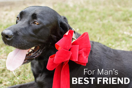 Gifts for Man's Best Friend