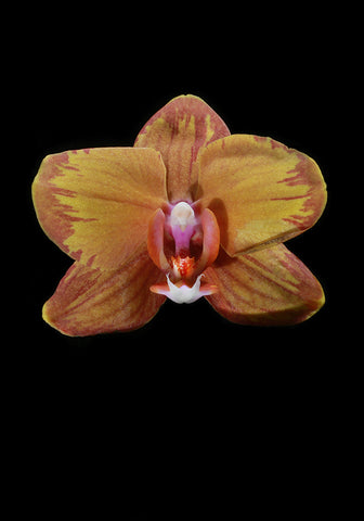 Orchid Sun, Prints by Photographer Tal Shpantzer