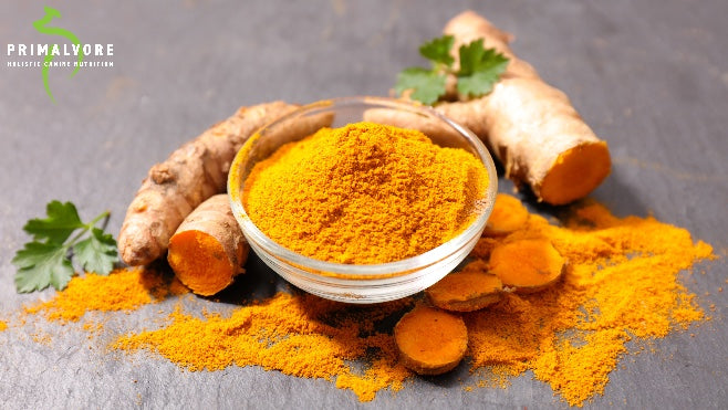 Why Turmeric is Good for Dogs