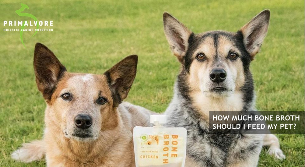 How Much Bone Broth Should I Give My Dog | Primalvore