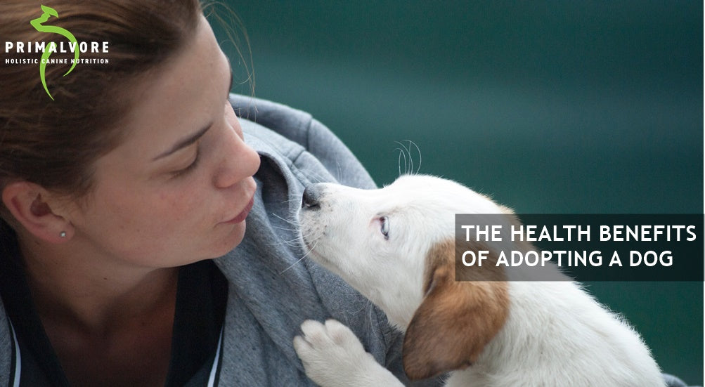 The Health Benefits Of Adopting A Dog