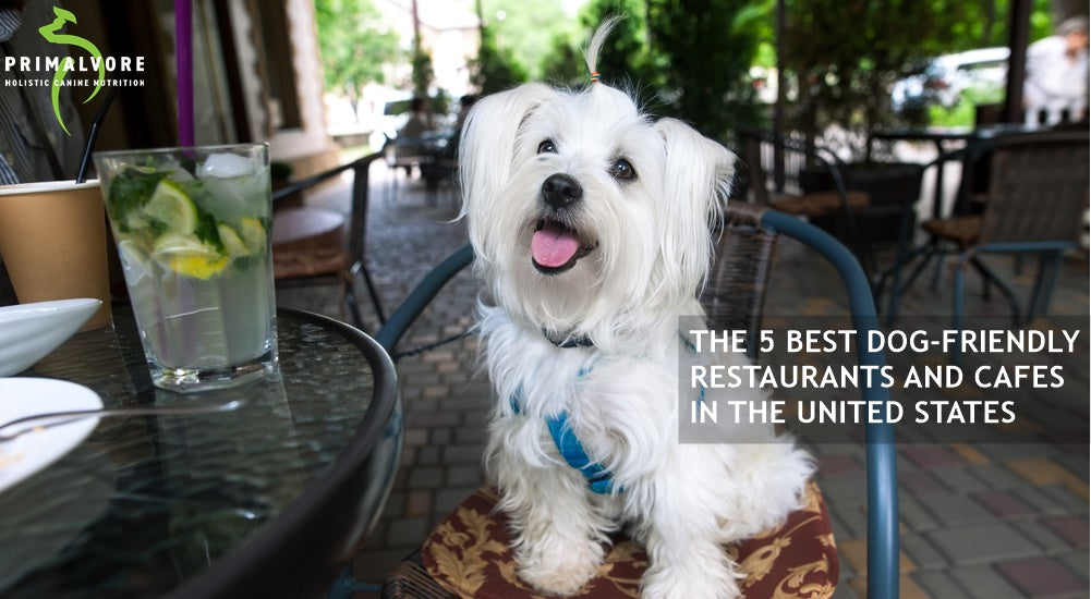 The 5 Best Dog-Friendly Restaurants in the U.S.
