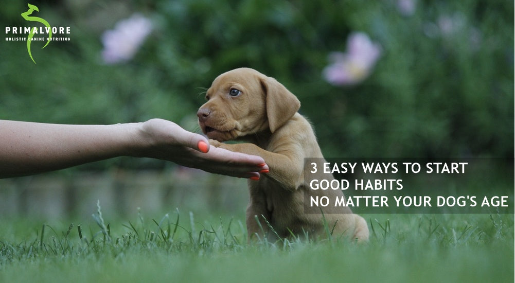 3 Easy Ways to Start Good Habits- No Matter Your Dog's Age