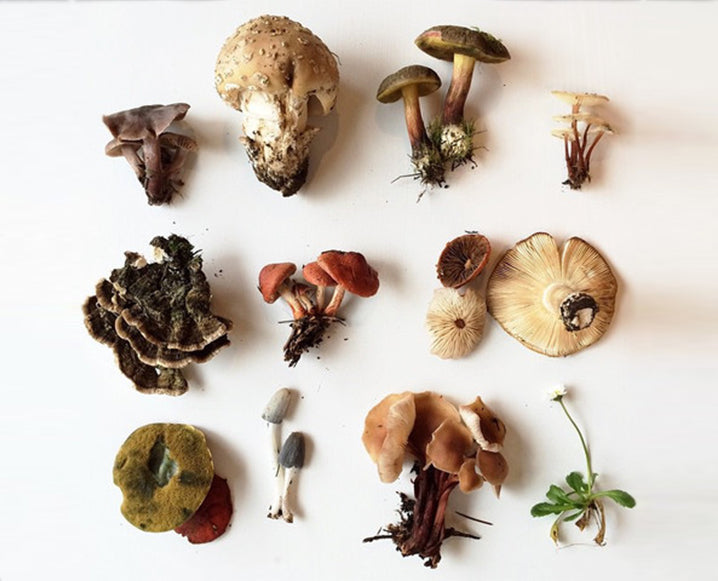 Mushrooms: Dinner Table or Medicine Cabinet?