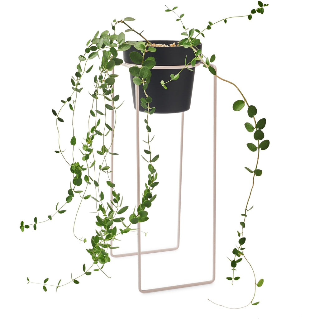 PLANT TALL - Pot Plant Stand