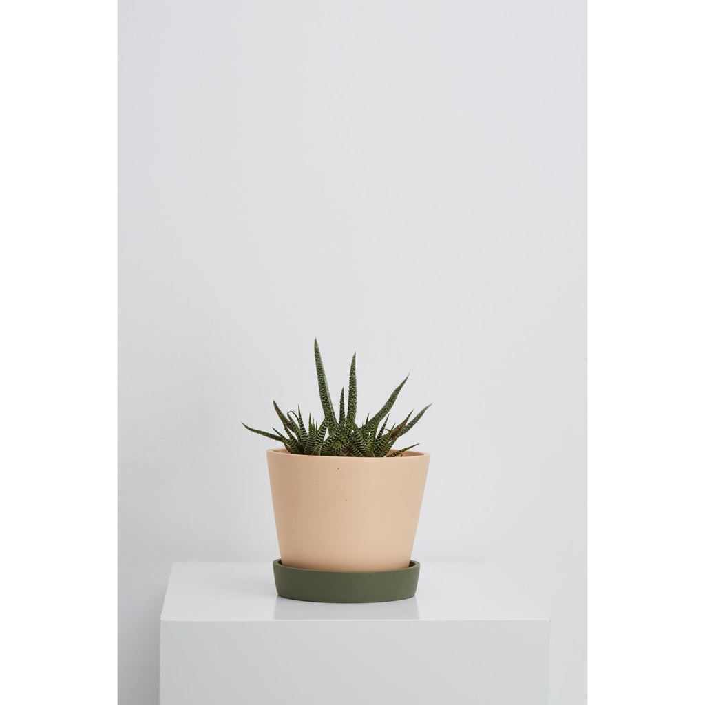 SMALL LOUISE POT