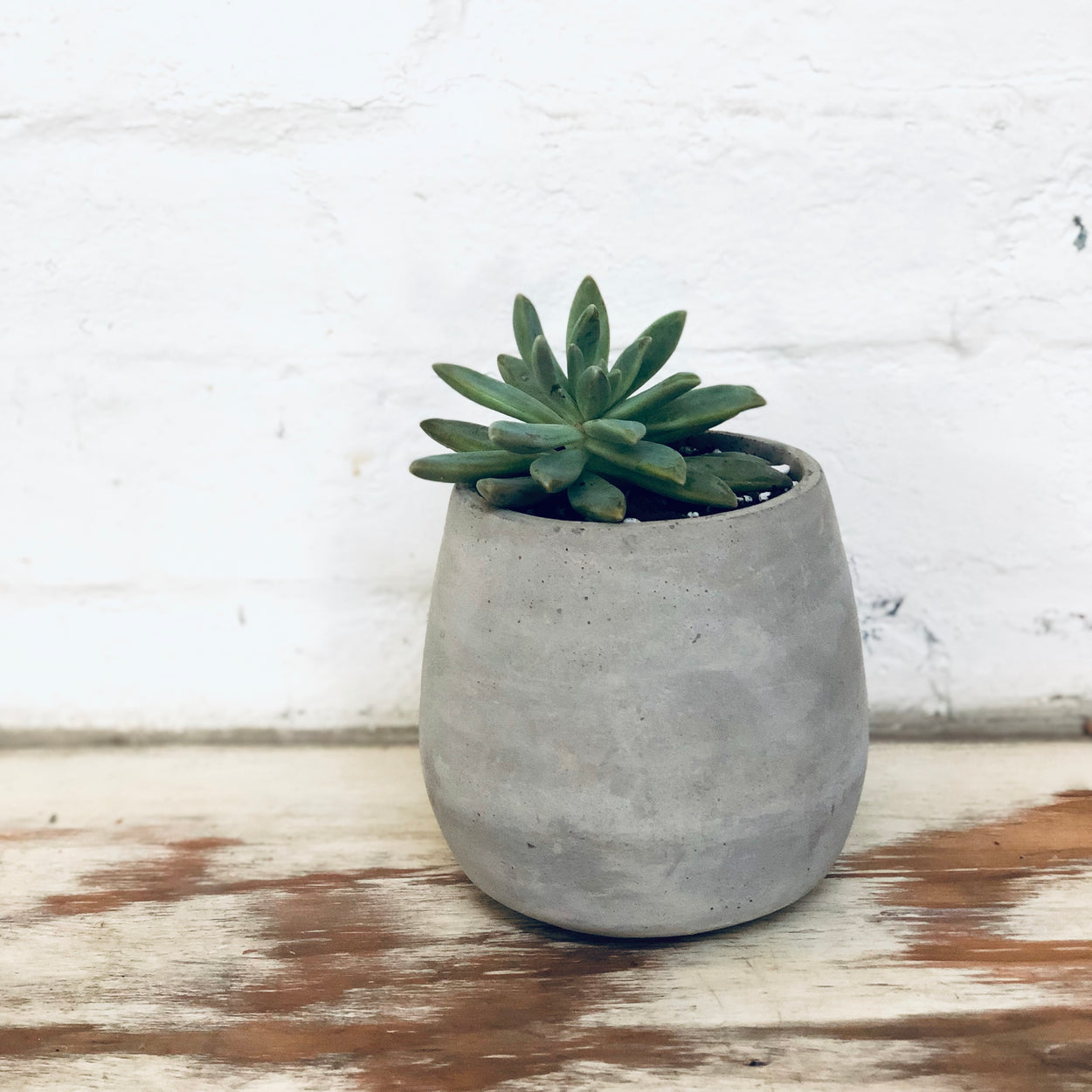 Grey Cement Pot - Round with succulent