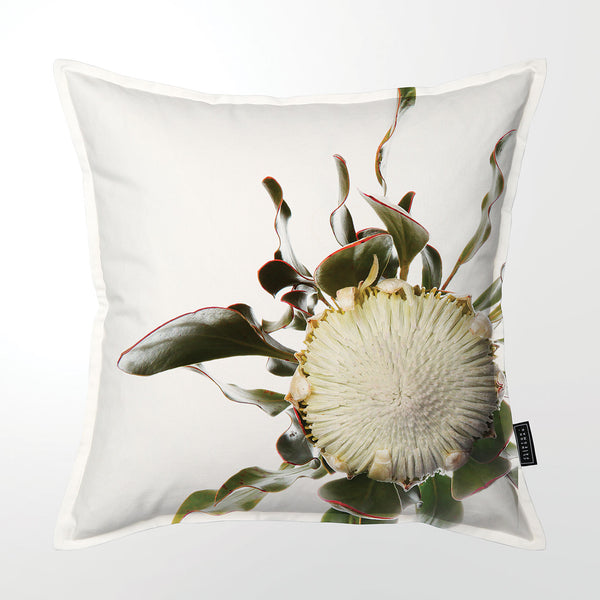 Scatter Cushion (Single sided print) - Feinbos protea