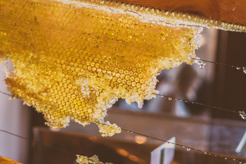 Raw honey comb bee